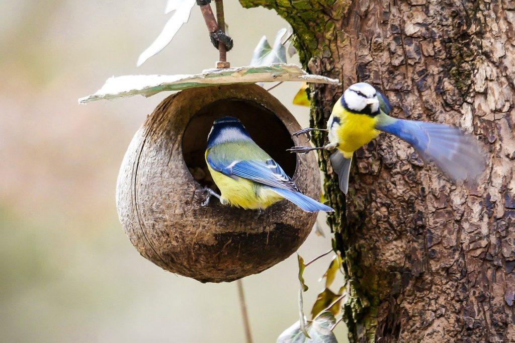 wildvogelfutter kaufen für blaumeise