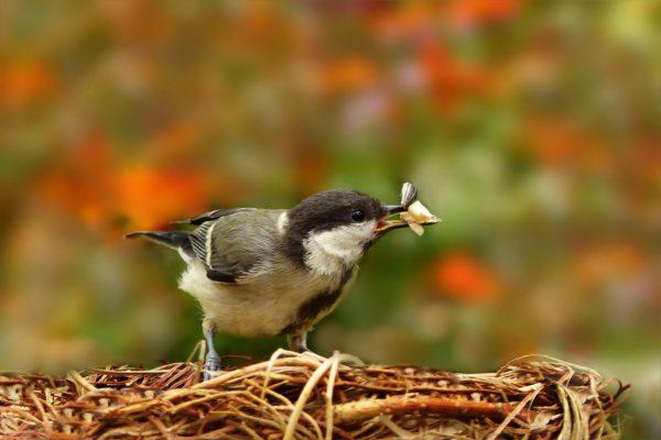 vogelfutter schalenlos