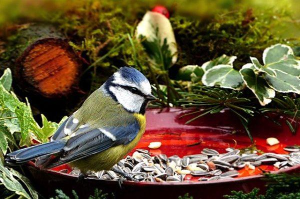 wildvogelfutter ganzjahresfutter