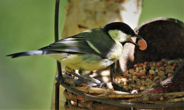wildvogelfutter ohne schalen 25kg