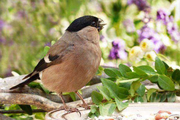 wildvogelfutter schalenlos