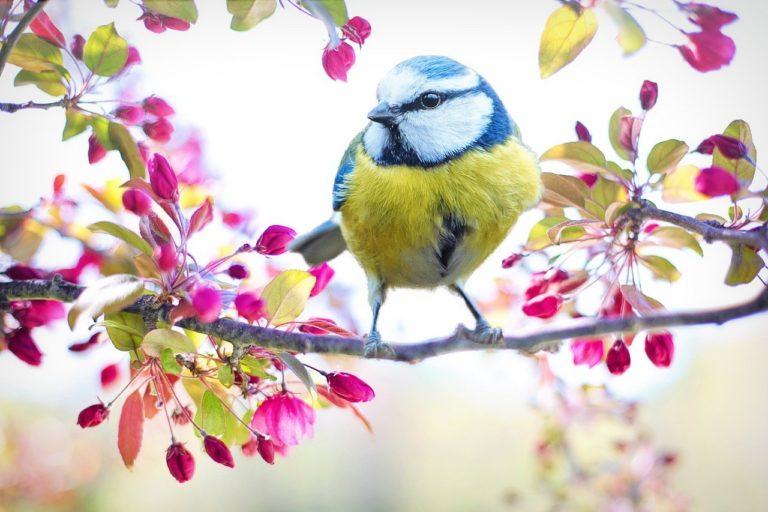vogelfuetterung gartenvoegel