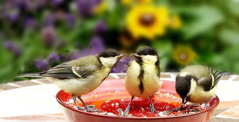 vogelfuetterung gartenvoegel meise