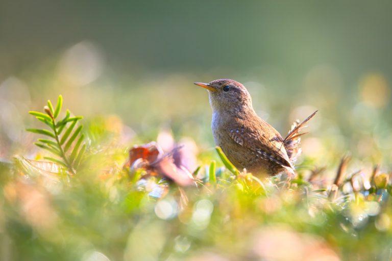 vogelfuetterung gartenvoegel natur