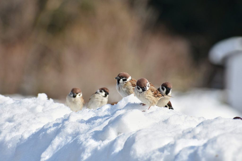 wintervogelfutter kaufen