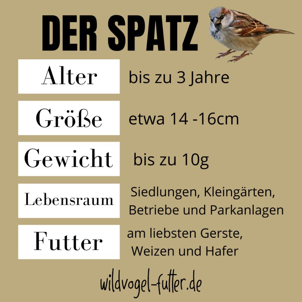 Was-fressen-Spatzen